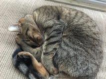 Ворсина кота Стоковые Изображения