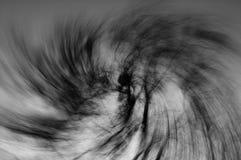 Вортекс ветвей дерева, черно-белый Стоковое Изображение RF