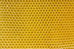 воск пчелы Стоковое фото RF