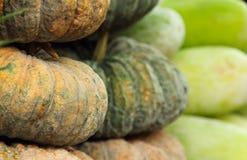 воск тыквы рынка gourd стоковые фотографии rf