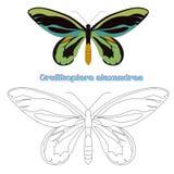 Воспитательный вектор бабочки книжка-раскраски игры Стоковые Фотографии RF