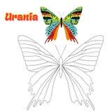 Воспитательный вектор бабочки книжка-раскраски игры Стоковые Изображения RF