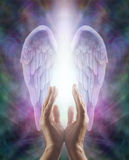 Воспринимать ангеликовую энергию Стоковые Изображения