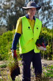 Восстановление дюны в Gold Coast Квинсленде Австралии Стоковые Фотографии RF