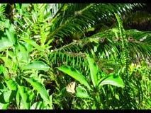 Восточная бабочка 3 Swallowtail сток-видео