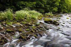 Восточное река Lyn, Watersmeet, северный Девон, Великобритания Стоковая Фотография