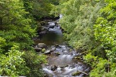 Восточное река Lyn, Watersmeet, северный Девон, Великобритания Стоковые Фото