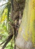Восточное lizzard сада Стоковые Изображения RF