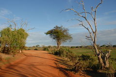 восточное tsavo стоковое фото rf