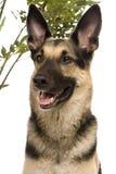 Восточно-европейская собака на белизне стоковое изображение