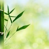 Восточные абстрактные предпосылки с бамбуковой травой стоковое изображение