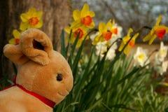 Восточные зайцы - горизонтальные стоковое изображение rf