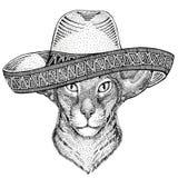 Восточный кот с Дикими Западами иллюстрации партии мексиканськой фиесты sombrero большого дикого животного ушей нося мексиканским Стоковая Фотография RF