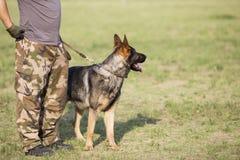 Восточный - собака немецкой овчарки Стоковое Фото
