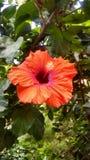 Восхитительные цвет и текстура Стоковое Фото