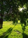 Восходящее солнце делает свой путь через листву дерева Стоковое Изображение RF