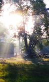 Восходящее солнце Стоковое Изображение RF