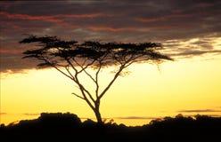 восход солнца акации Стоковая Фотография