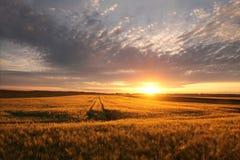 Восход солнца весны над полем зерна стоковое изображение