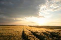 Восход солнца весны над полем зерна стоковая фотография