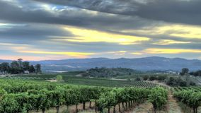 Восход солнца виноградника видеоматериал