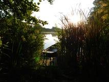 Восход солнца в джунглях и озере стоковое фото rf