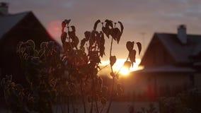 Восход солнца в зиме в деревне на предпосылке древесины и доме в зиме акции видеоматериалы