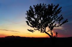 Восход солнца в небе, облаках и дереве утра стоковое фото