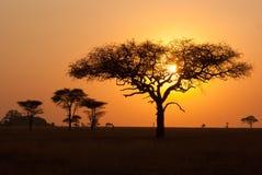 Восход солнца в парке serengeti стоковое фото rf