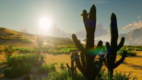Восход солнца в пустыне Раннее утро Далекие горы, песчанные дюны и знойное небо Красивый пейзаж Насекомые и птицы внутри акции видеоматериалы