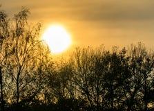 Восход солнца в тумане утра на пруде в более низкой Саксонии, черном tre Стоковая Фотография