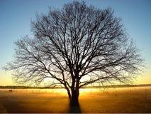 восход солнца в феврале Стоковое Изображение RF