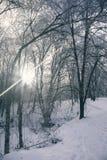 Восход солнца за деревьями стоковые изображения