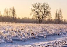 Восход солнца зимы в розовых цветах стоковые фотографии rf