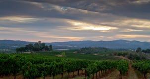 Восход солнца ландшафта виноградника сток-видео
