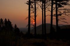 Восход солнца лесного пожара Стоковое Изображение RF