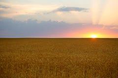 Восход солнца лета, пшеничное поле Стоковое Фото