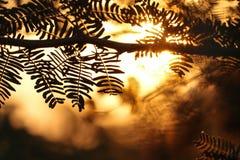 Восход солнца между листьями стоковая фотография rf