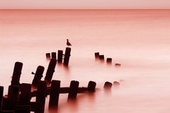 восход солнца моря norfolk стоковые изображения rf