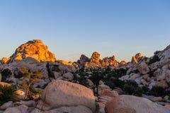 Восход солнца над национальным парком дерева Иешуа Стоковая Фотография