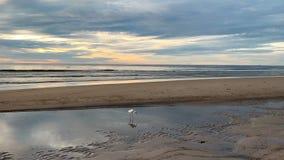 Восход солнца над тропическим островом с egret на пляже видеоматериал