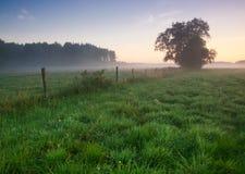 Восход солнца на лужке Стоковые Фотографии RF