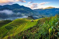 Восход солнца на террасных полях риса Стоковые Изображения