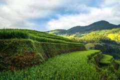 Восход солнца на террасных полях риса Стоковые Изображения RF