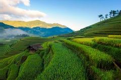 Восход солнца на террасных рисовых полях Стоковая Фотография RF