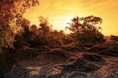 Восход солнца на утесах песчаника в лесе Фонтенбло стоковое изображение rf