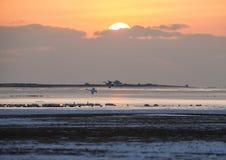 Восход солнца озера лебед Стоковая Фотография RF