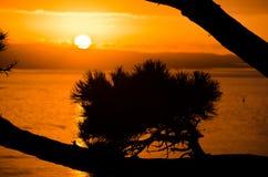 Восход солнца Окленда Стоковые Изображения RF