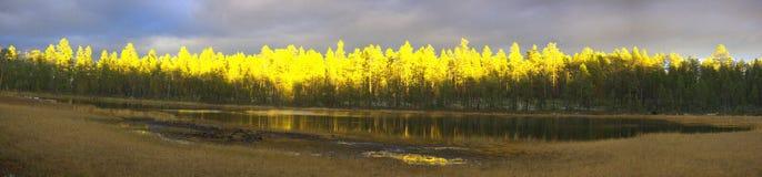 восход солнца освещает мощно древесины осени стоковые фотографии rf
