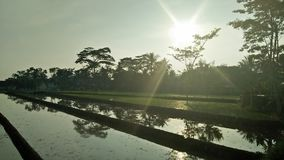 Восход солнца, падиы, рис fields, Индонезия стоковая фотография